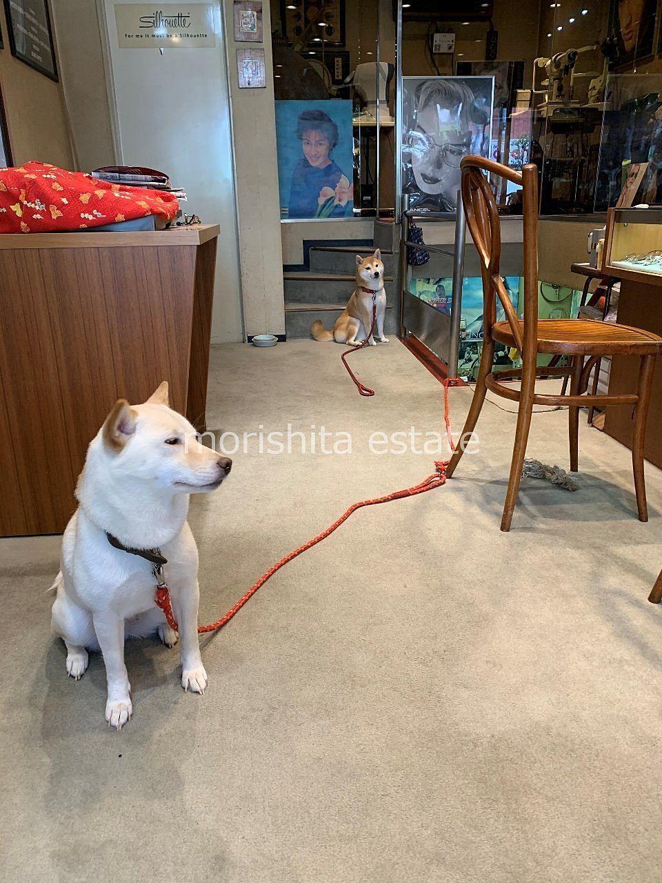 森下 メガネ コンタクト 修理 アイセンター 犬 写真