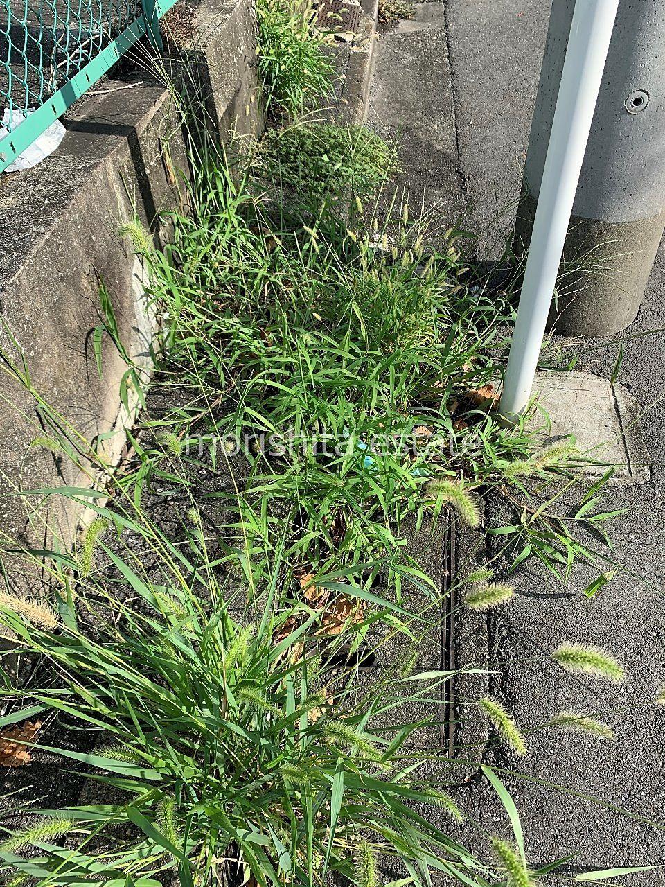 江東区 駐車場 雑草 ゴミ トラブル 迷惑行為 写真