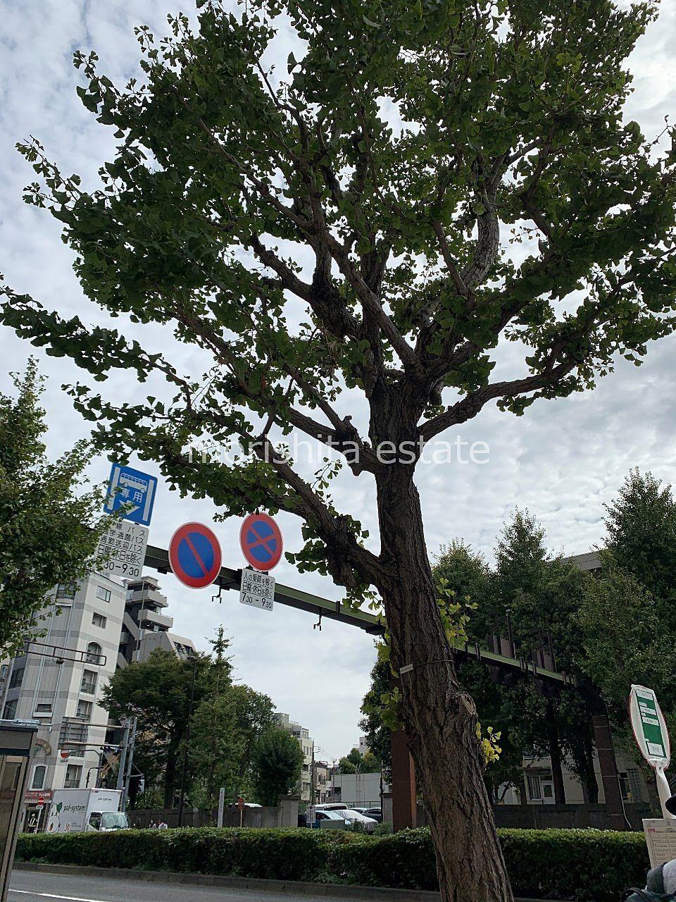 越中島 門前仲町 歩道整備 バス停改修 樹木撤去 写真