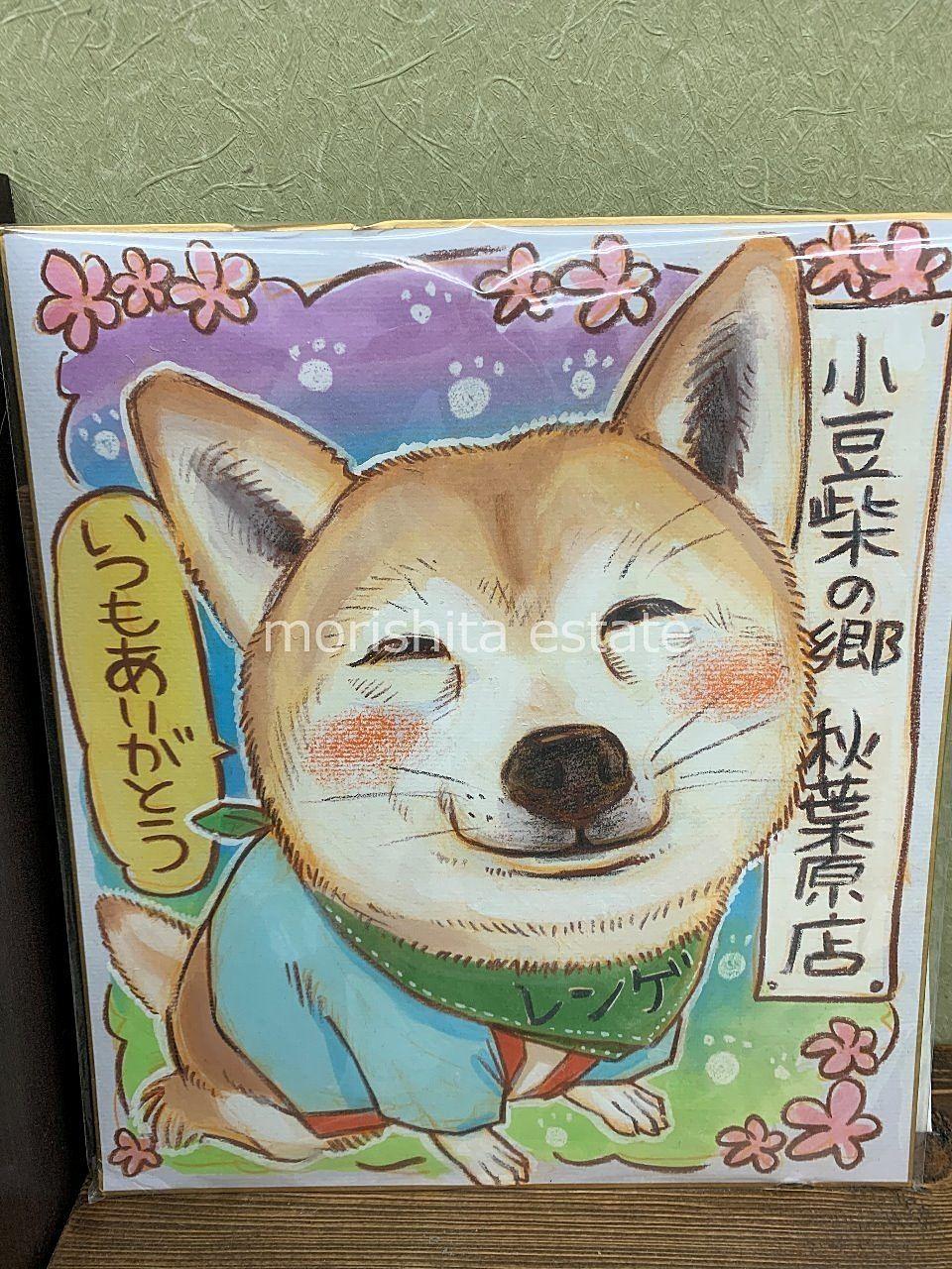 秋葉原 小豆柴カフェ 犬カフェ 写真