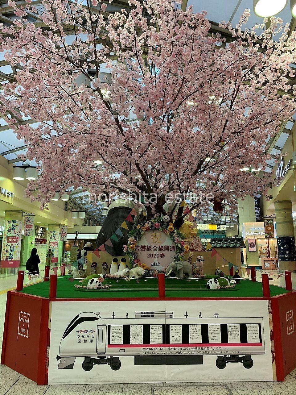 JR上野駅 桜 常磐線全線開通 2020春 写真
